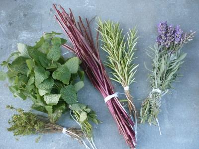 Heilpflanzen als gesunde Alternative