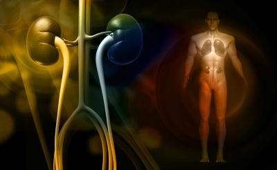 Wenn die Leber lahmliegt: Tipps bei Stoffwechselproblemen und zur Leberentgiftung